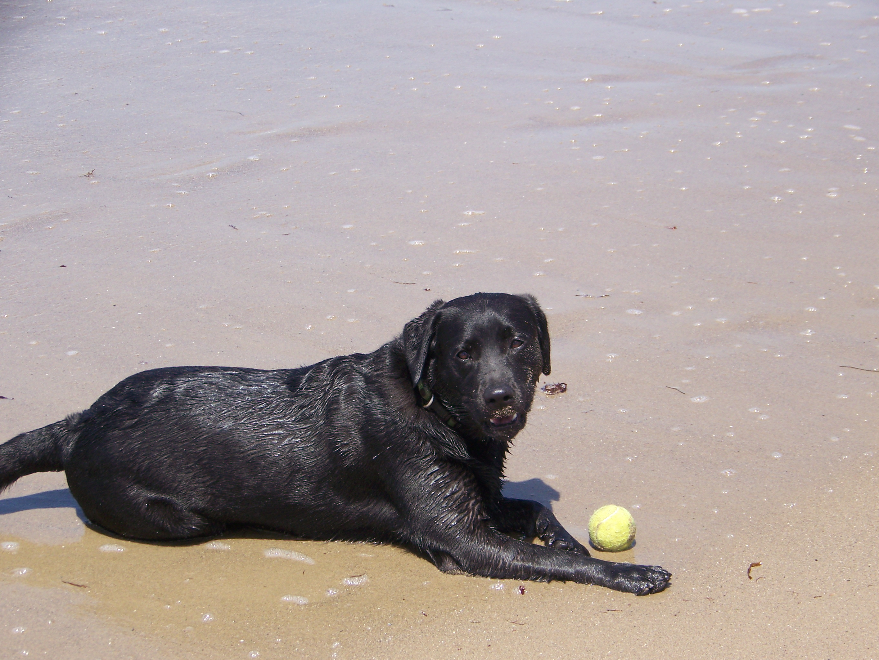 I miss the beach and blogging the unknown cystic Dog will eat out of hand but not bowl