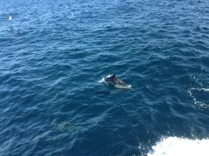Hey, it's Flipper, my little dolphin buddy.
