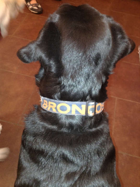 Our black lab is ready and wearing her lucky collar.